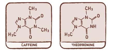 caffeine-theobromine.jpg